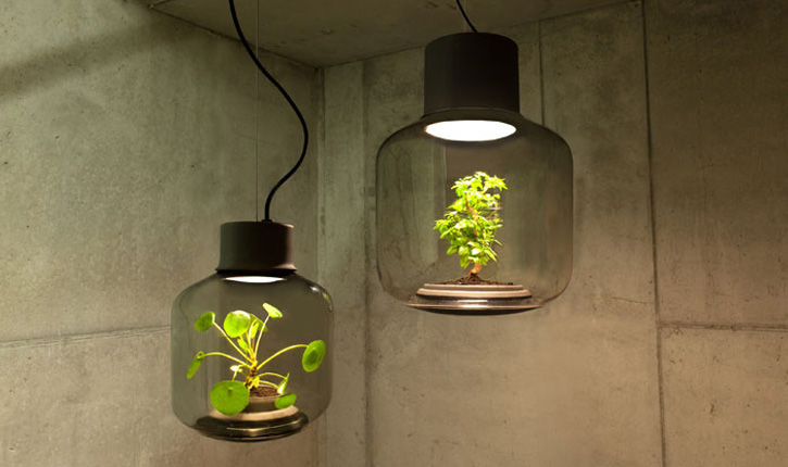 cover lampi vegetale