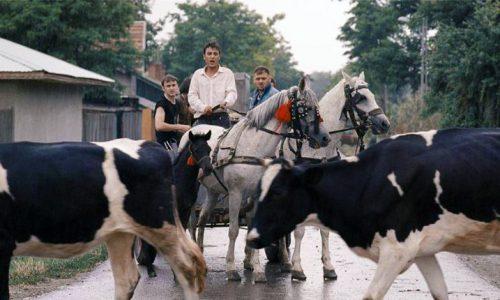 tiff Zilele Filmului Românesc